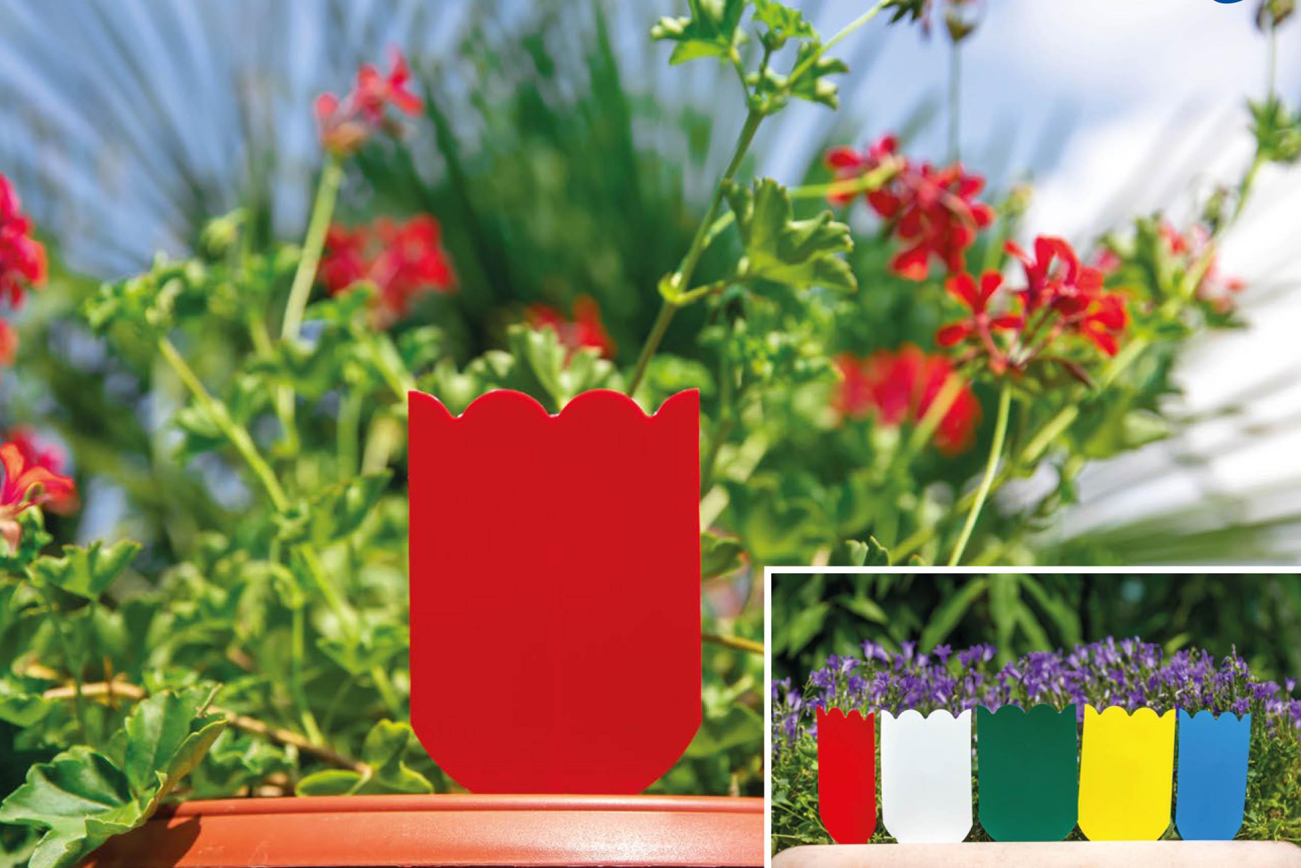 trappole parassiti delle piante in vaso