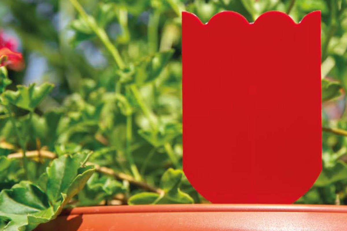 trappole-parassiti-delle-piante-in-vaso