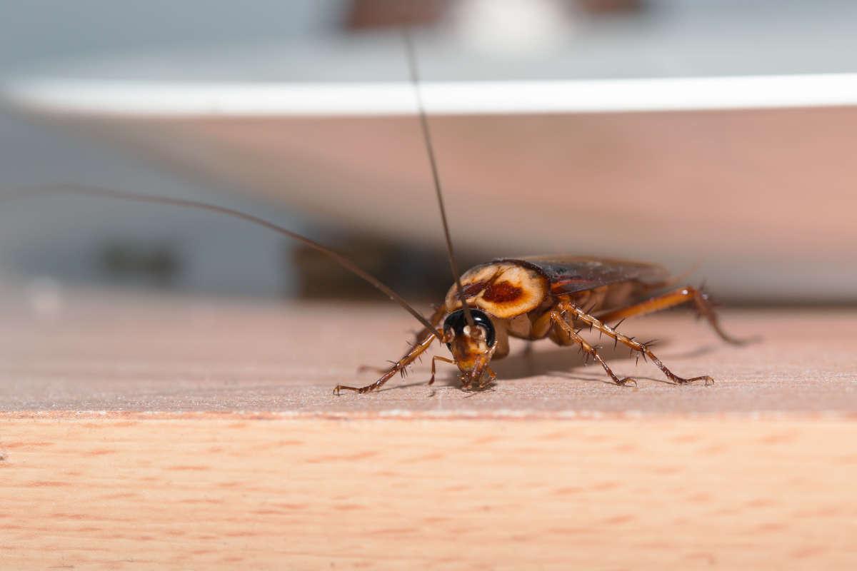 trappola-monitor-scarafaggi