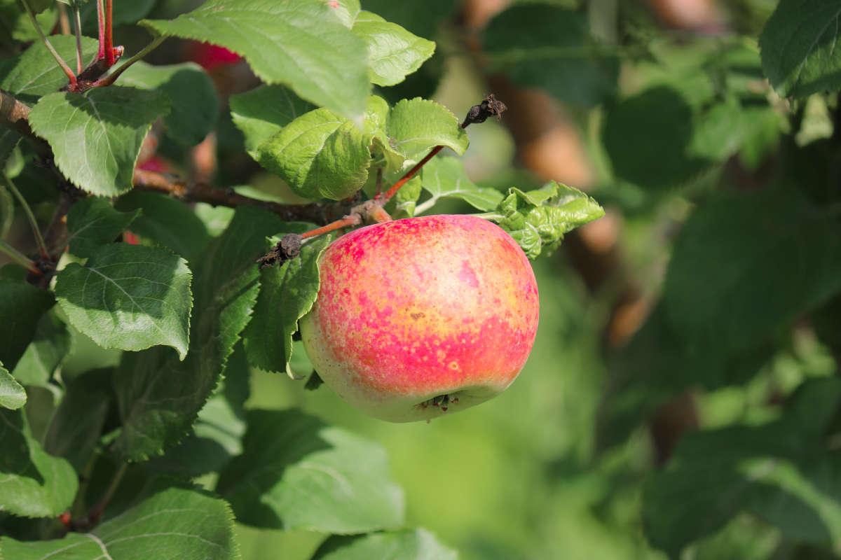 trappole monitor moscerini frutta